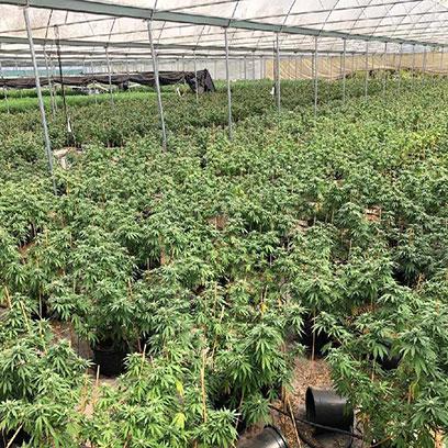 Cheap 2 Gallon Nursery Pots Suppliers Florida