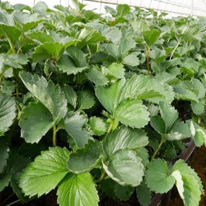 Plastic Nursery Seedling Trays Manufacturers China