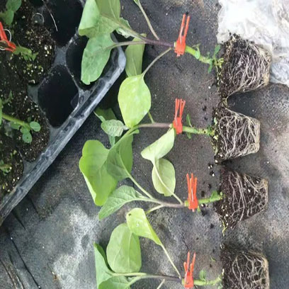 Reusable Seed Starting Trays Suppliers Philippines