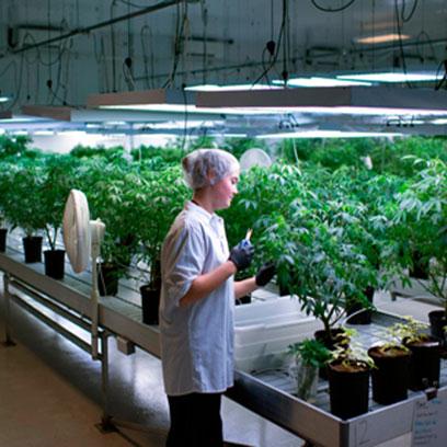 Cheap 1 Gallon Nursery Pots Wholesale Washington