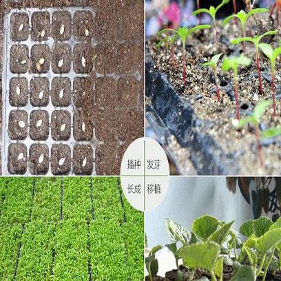 Cheap Plastic Seed Trays Suppliers Bangladesh