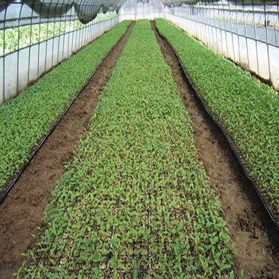 Plastic Seedling Trays Wholesale Suppliers Dominicana