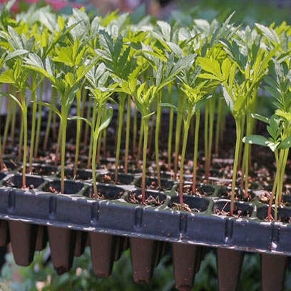 Best Seed Starting Trays Wholesale Suppliers UAE