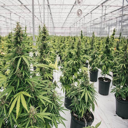 Black Plastic Plant Pots Wholesale USA