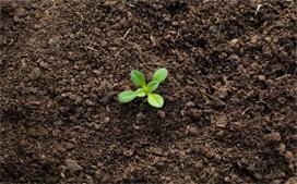 农用地土壤污染风险管控标准