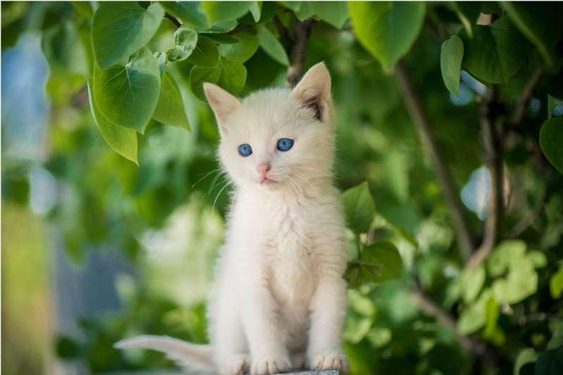 小白猫的报恩-柚子云阅读