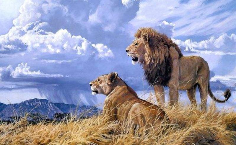 良心未泯的狮子