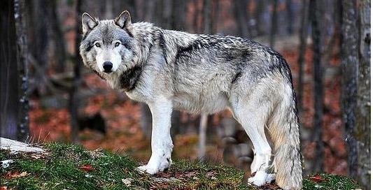 狼狈为奸的故事